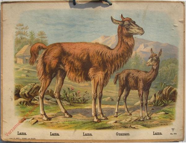 772 - Lama, Lamam Lama, Guanoco, Lama